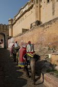 Elephants And Mahouts At Amber Fort