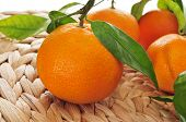 stock photo of mandarin orange  - closeup of a pile of mandarin oranges on a table - JPG