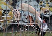 Chiang Mai,North of  Thailand - December 12, 2013 , Tiger Show at Chiang Mai Night Safari