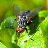 Common Fly on Grass
