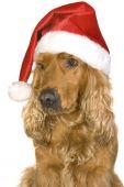 Dog In Hubcap
