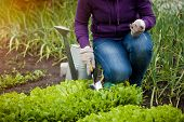 Photo Of Woman Working Ar Garden On Salad Bed