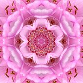 Pink Concentric Flower Center Mandala Kaleidoscope