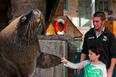 Boy and Sea Lion shaking hands