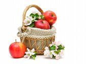 Ripe Apples And Apple Flowers In A Basket On A White Background.