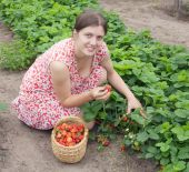 Girl Picking Strawberry In The Field