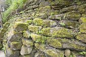 Dry Stone Wall Covered In Moss And Vegetation