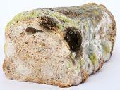 Loaf Of Mouldy Brown Bread