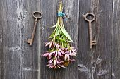Medical Herbs Echinacea Flowers Bunch And Old Rusty Key On Wall