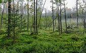Green Bog