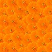 Orange Cosmos Background
