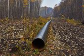 Construction Of The Pipeline On A Forest .