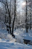 Winter Calm Frozen Landscape With Beautiful Frosted Trees In The Forest And A River In Frosty Day