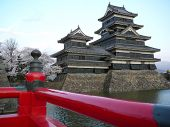Matsumoto Schloss während sakura