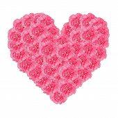 Heart Of Carnation Flower