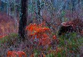Fern Leaves In Vivid Colors
