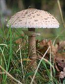 Mushroom Iin Autumn Forest