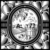 Apple harvest black and white. Vector