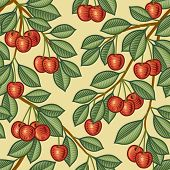 Seamless cherry background. Vector