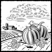 Landscape with pumpkins black and white. Vector