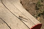 Dragonfly sitting on pine wood log on natural background