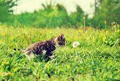 Curiosity Kitten In Summer
