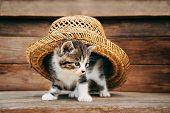 Curiosity Kitten Under The Hat
