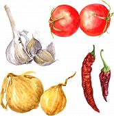 Set of  watercolor drawing onions