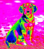 Infra Red Dog