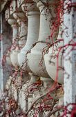 Balusters Twining Vines