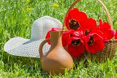 foto of panama hat  - Red tulips in a wicker basket white hat and crock in the green grass on a sunny spring day - JPG