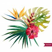 image of jungle flowers  - Beautiful vector illustration with nice tropical flowers - JPG