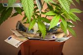 picture of cannabis  - Cannabis business concept - JPG