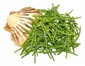 foto of marshes  - Fresh marsh samphire a coastal plant with vibrant green stalks and a crisp salty taste isolated on a white background - JPG