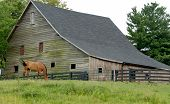 Horse Grazing by Barn
