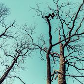 picture of daring  - Leafless dare trees over sky background - JPG