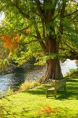 image of royal botanic gardens  - Wooden bench under the tree facing small pond in the Royal Botanic Gardens in London - JPG