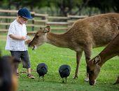 Little boy feeding deers in farm