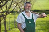 Portrait of a senior man gardening in his garden/orchard