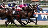 MELBOURNE - MARCH 13: Horses race to the finish of the Roy Higgins Quality, won by Elmore at Flemington on March 13, 2010 - Melbourne, Australia.