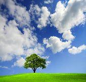 Árvore verde em um campo