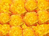 yellow roses for decoration over background