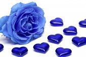 pic of blue rose  - blue rose with hearts over white background - JPG