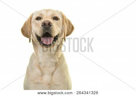 poster of Portrait Of A Blond Labrador Retriever Dog Looking At The Camera With A Big Happy Smile Isolated On