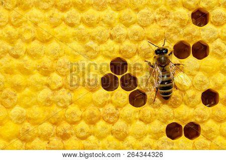Macro Photo Of Honey Bee