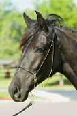 Beautiful Horses 89. See more in my portfolio