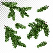 A Set Of Different Green, Realistic Branch Of Fir. Fir Branches. Isolated On White. Christmas Illust poster