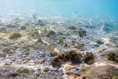 Sunbeams Underwater Rocks And Pebbles On The Seabed Swimming Fish poster