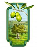 Olive oil label with a beautiful country landscape. Digital illustration, clipping path included.