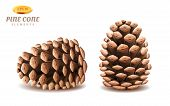 Isolated 3d Pine Cones Or Realistic Evergreen Strobilus. Coniferous Winter Plant Organ For Seeds. De poster